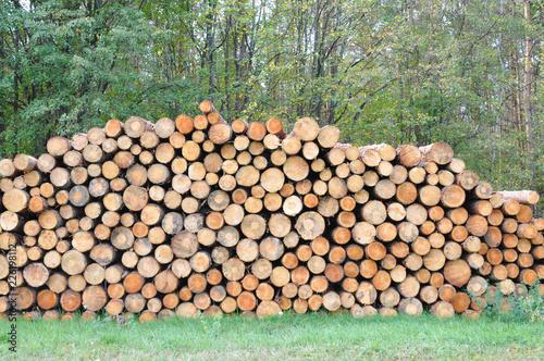 Holz Vorlage Hintergrund Deko muster baumstamm Baumstämme ...