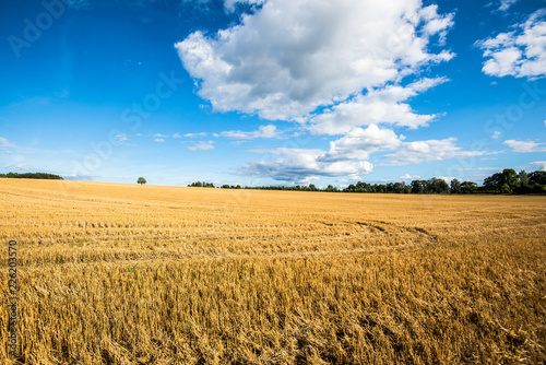 Foto op Aluminium Platteland Panoramic view of the country agricultural field on a sunny day, Estonia