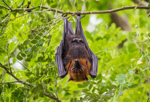 Bats lying on the tree