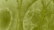 canvas print picture - Kreativer farbiger Hintergrund - Runde, weiche Linien - Fantasie - Grasgruen