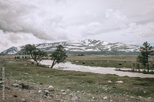 Foto op Canvas Khaki Mountains in Mongolia