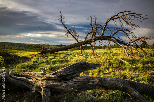 Fotografía  Sunset in Medicine Bow-Routt National Forest
