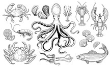 Vector Set. Seafood. Oyster, Sea Scallop, Crab, Shrimp, Lobster, Langoustine, Spiny Lobster,  Octopus, Squid, Fish.