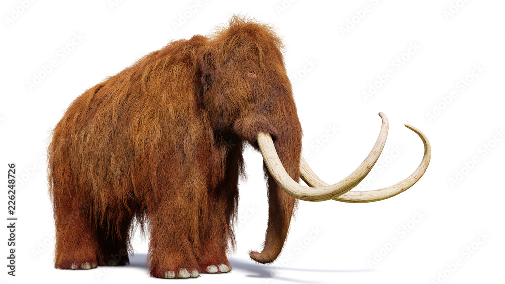 Fototapety, obrazy: woolly mammoth, prehistoric mammal isolated with shadow on white background (3d illustration)