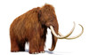 canvas print picture woolly mammoth, prehistoric mammal isolated with shadow on white background (3d illustration)