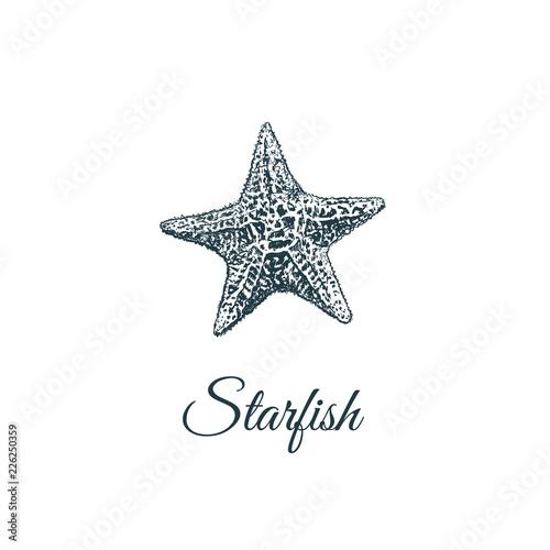 Obraz na płótnie Starfish  skech. Starfish hand drawing