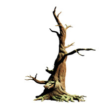 Big Old Dead Tree, Isolated On...