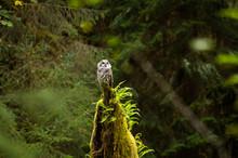 Pacific Northwest Trees And Wildlife