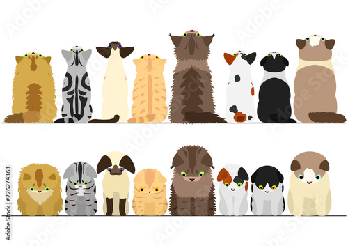 Fotomural cute cats looking up and down border set
