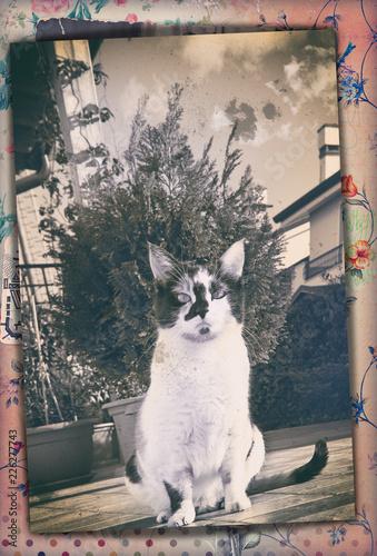 Spoed Foto op Canvas Imagination Vecchia fotografia vintage in bianco e nero, con gatto in giardino