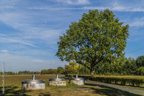 Fototapeta The single tree in the park obraz na płótnie