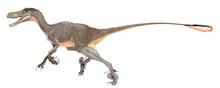 ヴェロキラプトル・モンゴリエンシス。白亜紀後期の小型のマニラプトル類。全長は1.8メートル程度であり、現代の中から大型犬程度。集団で狩りをしたと思われる。ヴェロキラプトルはすばしこい捕食者という意味。このイラスト画像でも、ラプトル類の特徴である後ろ足の鉤爪を鋭く描いたが、大きさからみて自分より大型の恐竜の皮膚の厚さに歯が立たなかったのではないかと思う。マニラプトル類は鳥類に近く、羽毛を描いた。