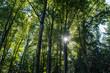 Sonnenlicht in Baumwipfeln