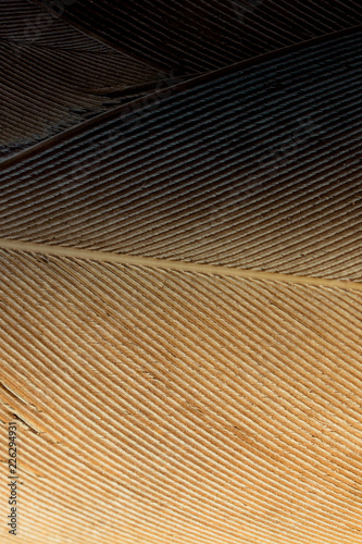 Aluminium Prints Macro photography Beautiful bird feathers for decorative aims
