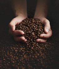 Person With Hands Full Of Coffee Beans