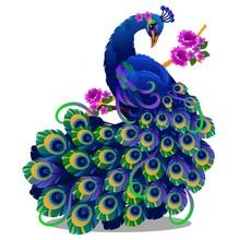 Beautiful Bird Peacock Sitting...