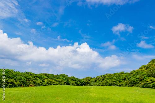 沖縄石垣島の草原風景 Fototapet