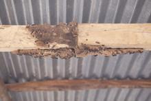 Hymenoptera On Wood. Wasp's Ne...
