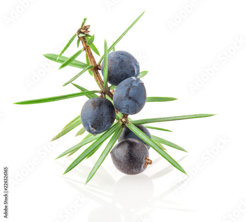 Fototapeta Juniper twig with berries isolated on white background obraz