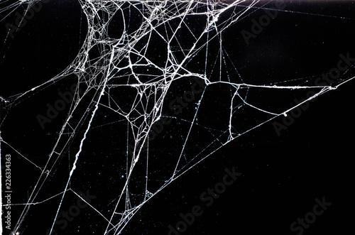 Obraz na płótnie spider web,halloween
