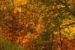 Fall Colors North Carolina
