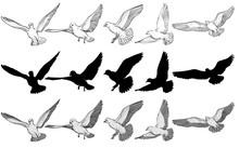 Flying Pigeons Vector Illustra...