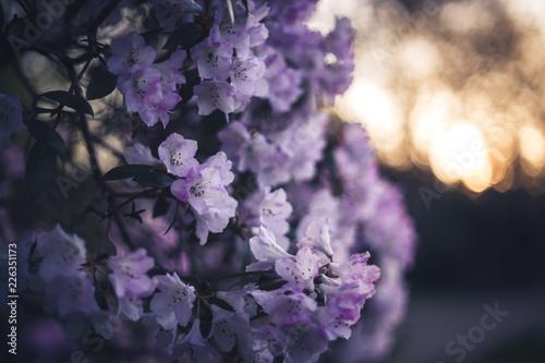 Cadres-photo bureau Jardin purple flowers 2