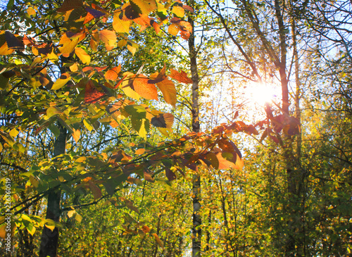 Autumn Forest Landscape Background Fall Tree Leaves And
