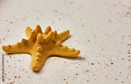 Isolated starfish in the sand