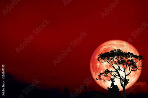 full Hunter's moon back over silhouette tree in field on night sky