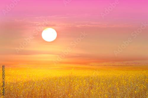 In de dag Candy roze sunhemp in the valley and the sundawn and the color sky