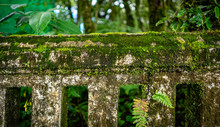 Green Moss On Concrete Fence