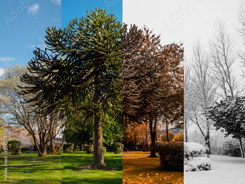 Spring, Summer, Fall and Winter Fototapeta