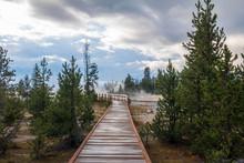 Boardwalk Between Pine Trees And Hot Springs