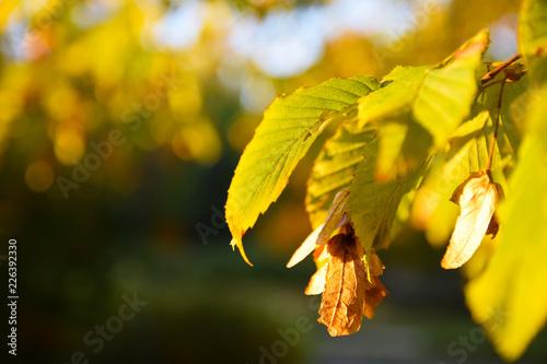 Obraz Barwy jesieni o zachodzie słońca - fototapety do salonu