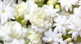 White jasmine flowers fresh flowers natural