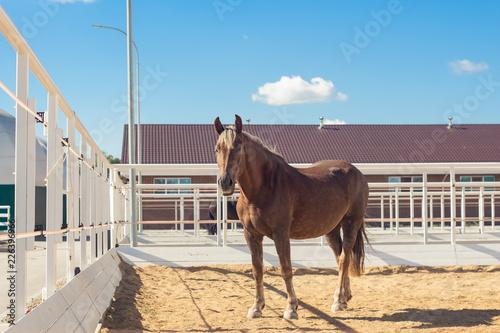 Fényképezés Horse walks in the paddock in a modern equestrian club