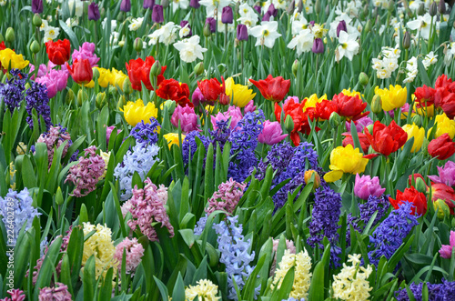 Keuken foto achterwand Tulp Beautiful spring garden filled with color