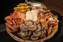 Assortment Of Mushrooms In A B...