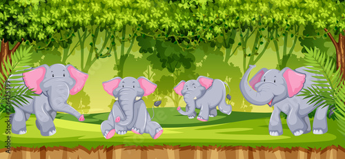 Elephants in the jungle scene