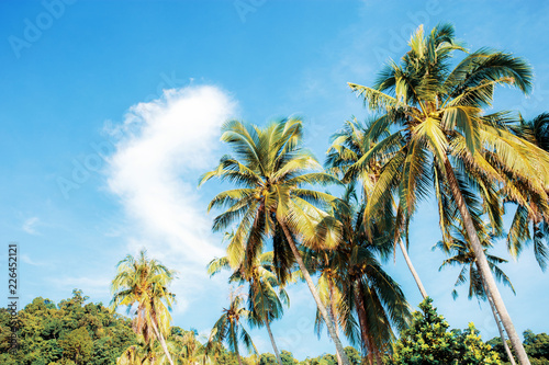 Foto op Plexiglas Palm boom Palm tree at sky.