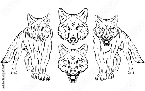 Fototapeta premium wolf, isolated on white background, colour illustration, suitable as logo or team mascot, dangerous forest predator, wolf's head, wild animal, gray wolf in full growth, vector graphics to design