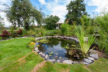 Beautiful Designed Garden Fish Pond With Water-lily In A Well Cared Backyard Gardening Background