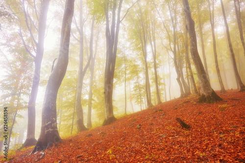 Obraz Autumn landscape in foggy wood - fototapety do salonu