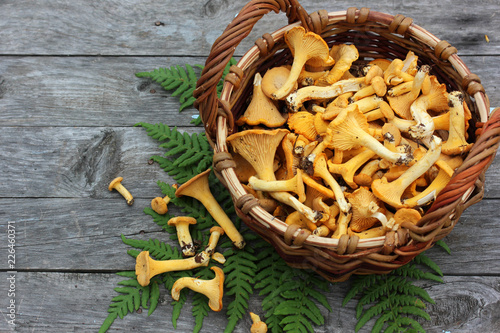 Mushrooms chanterelles in a basket, top view. Copy space.