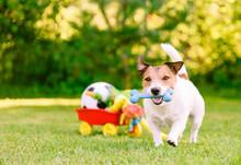 Happy Dog Playing Outdoor Walk...