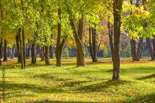 Foto op Canvas Pistache Autumn landscape. Autumn Park.