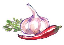 Garlic, Chili Pepper And Bunch Of Cilantro Leaves Painted In Watercolor On Clean White Background