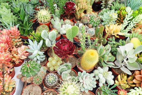 Carta da parati group of different cactus