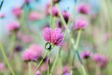 Wild Flower In Winter.